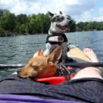 The Best Kayak for Dogs - Our 7 Top Picks