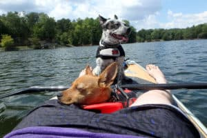 Read more about the article The Best Kayak for Dogs – Our 7 Top Picks