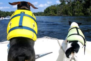 Best Inflatable Boat for Dogs – Our Top 7 Picks