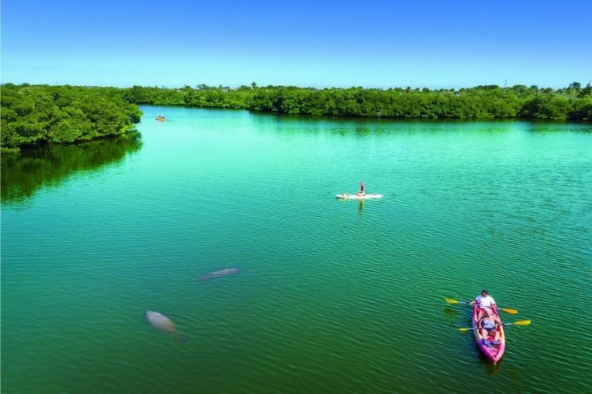 Kayak in Tampa Bay [Best Places for Kayaking]